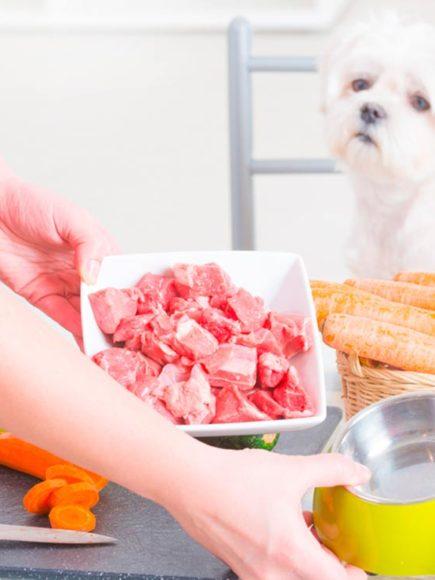Experto en Nutrición y Dietética Canina y Felina