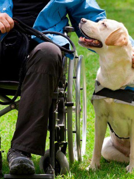 Monitor de Terapia Asistida con Perros – Certificado por APENB